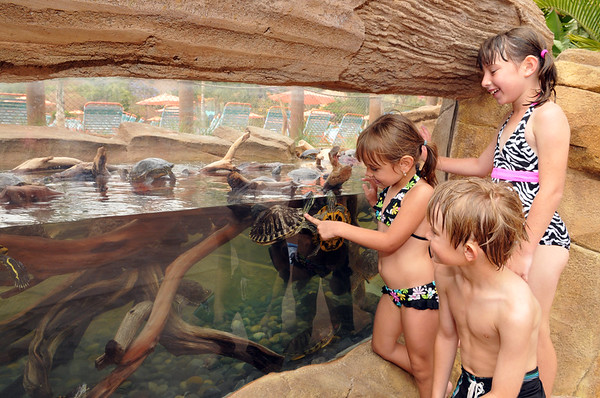 'Fiesta Aquatica' highlights summer fun at AQUATICA SAN DIEGO water park